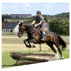 L'école d'équitation